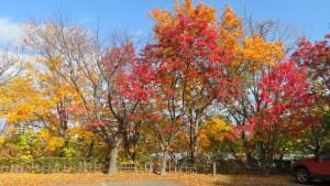 旧小熊邸の紅葉