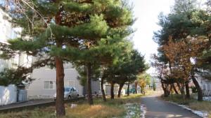 北白石サイクリングロードと松並木