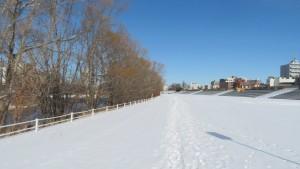 雪に覆われた豊平川サイクリングロード園路と河畔林