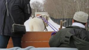 シャンシャン鈴をつけた馬そり