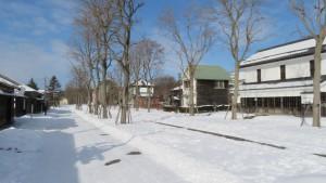 市街地群の建物とニセアカシア並木