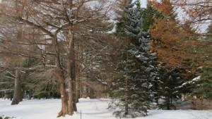 植物園内の樹々