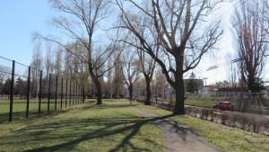 園路とシダレヤナギの木立