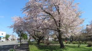 平和通と白石公園