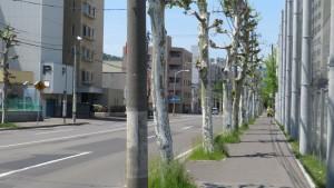市道南3条線のプラタナス並木