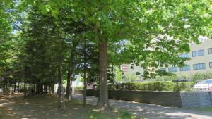 札幌医大遊歩道とアカナラ