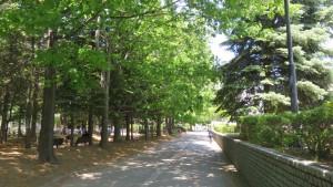 札幌医大遊歩道と歩道