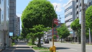 市道北3条線とネグンドカエデ並木