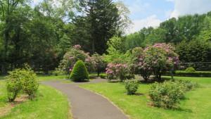 花木園とシャクナゲ