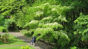 花木園とヤマボウシ