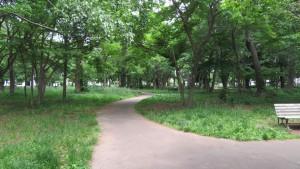 園路「大学村の森」