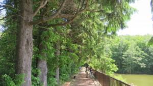 えん堤のヨーロッパトウヒ並木