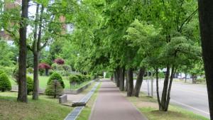 シナノキの並木道