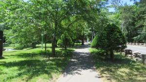 円山公園の園路