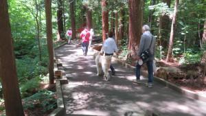 スギ林の中の木道