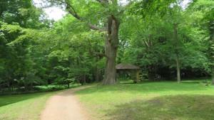 ハルニレの巨木とあずまや