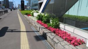 地下鉄福住駅の花壇