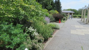 花木園のボーダーガーデン