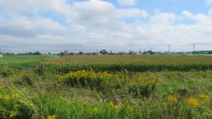 広大なデントコーン畑を望む