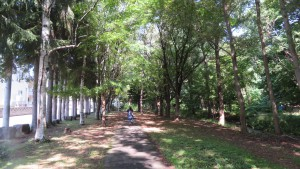 精進河畔公園の樹木に囲まれた園路