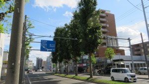南1条通中央分離帯のアカナラ並木