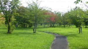 「豊平川桜の杜」内の園路