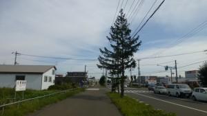 米里通とドイツトウヒ並木
