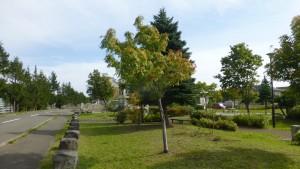 米里のびのび公園