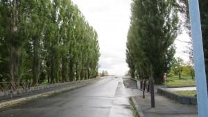 モエレ沼公園西口のポプラ並木