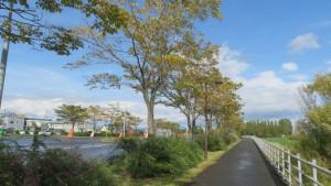 伏古拓北通とハルニレ並木の黄葉