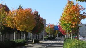 ひばりが丘通とベニカエデ並木の紅葉
