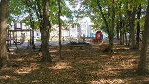厚別南白樺公園内の木立と落ち葉