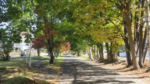 紅葉の札幌恵庭自転車道