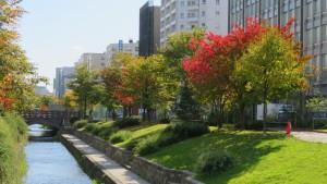 創成川公園の紅葉