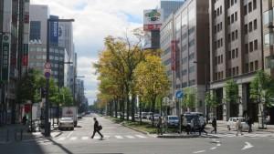 [札幌駅前通]ハルニレの黄葉