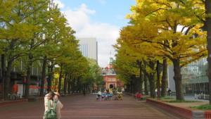 [北3条広場]イチョウの黄葉と道庁赤れんが庁舎