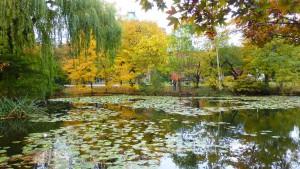 南の池と紅葉