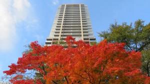 [大通公園]ヤマモミジの紅葉とザ・ライオンズ大通公園タワー