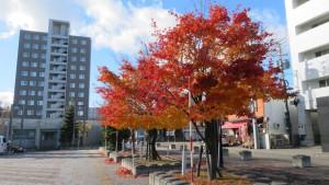 ドーム前広場とヤマモミジの紅葉
