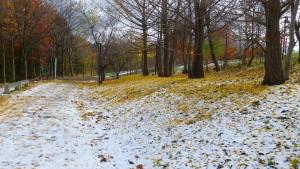 雪に覆われた散策路とイチョウの落ち葉
