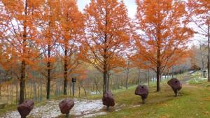 メタセコイアの紅葉と野外彫刻