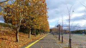 駐車場とプラタナス並木の黄葉