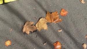 プラタナスの落ち葉