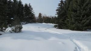 雪に埋まるヒースガーデン