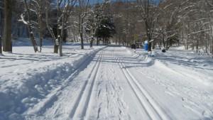 森の中を通る雪の園路