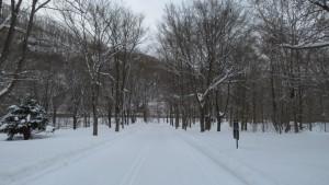 鱒見の滝に向かう雪の園路