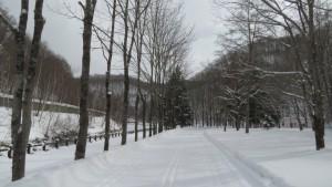 ヤチダモ並木と雪の園路