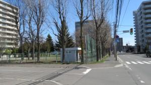 若葉公園のヤチダモの巨木