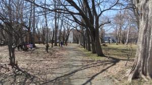 白石公園の木立と園路