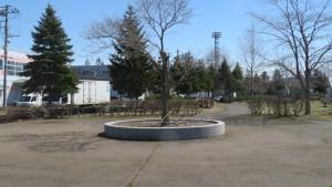 米里北公園 入口広場のシンボルツリー